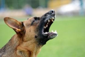 Eine Abwehr gegen einen Hundeangriff stellt unter Umständen einen Notstand dar.