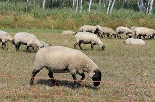 Argarumweltmaßnahmen betreffen auch Nutztiere: Die Förderung des Genpools für deren Zucht spielt eine entscheidende Rolle.