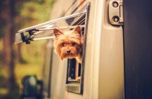 Eine Anschnallpflicht für Hunde gibt es im Wohnmobil nicht. Gesichert werden müssen die Tiere dennoch.