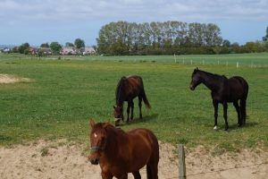 Der Begriff artgerechte Tierhaltung wird vor allem bei Nutztieren in der Landwirtschaft angewandt. Er gilt aber für alle domestizierten Tiere.