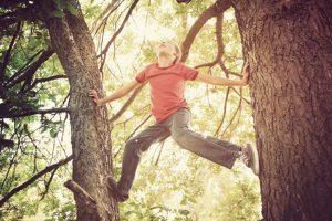 Auf Bäume zu klettern, kann zu Geldbußen führen.