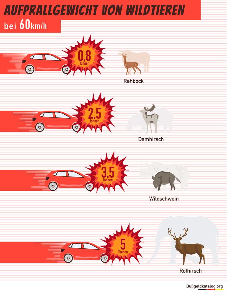 Die Grafik veranschaulicht das Gewicht, mit dem verschieden große Wildtiere auf ein Auto mit einer Geschwindigkeit von 60 Kilometer pro Stunde aufprallen.