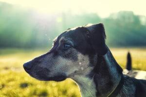 Trotz Ausgangssperre: Der Hund darf weiterhin Gassi geführt werden.