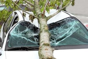 Autofahren bei Sturm: Bäume können zu einer Gefahr werden.