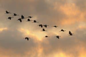 Bedrohte Tierarten sind auch einzelne Vögel