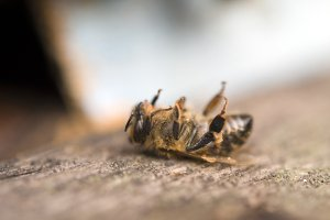 Bienen zu töten, ist verboten und bei richtigem Verhalten auch gar nicht notwendig.