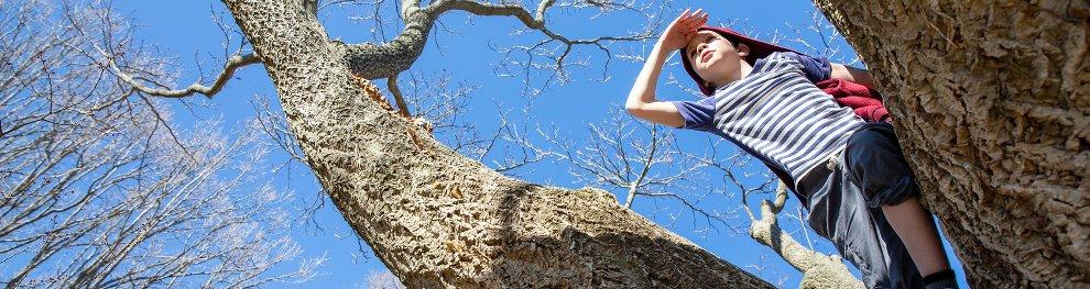 Klettern verboten? Wann dürfen Sie Bäume und Dächer erklimmen?