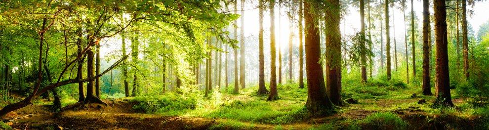 Auf Bäume klettern: Auch Bußgeldgefahr?