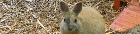 Kaninchen und Hasen