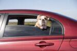 Bußgeldkatalog zum Thema Tiere im Auto transportieren