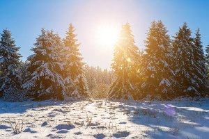 Bußgeldkatalog Weihnachtsbaum