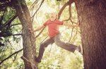 Auf Bäume zu klettern kann zu Geldbußen führen.
