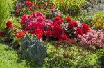 Gartenabfälle entsorgen