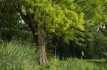 Hecke und Baum beschneiden