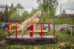 Zieht ein Hund, der zum Spielplatz mitkommt, ein Bußgeld nach sich?