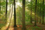 Der Jagderlaubnisschein ist notwendig zum Jagen im Wald.