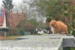 Tiere am Straßenrand: Rennen dies plötzlich los, kann es passieren, dass eine Katze überfahren wird.