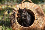 Die Katzenhaltung in einer Mietwohnung ist möglich, sofern keine Lärm- oder Geruchsbelästigung entsteht.