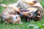 Eine Tierversicherung kann Sie im Ernstfall finanziell entlasten.