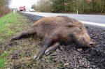 Es ist keine Seltenheit, dass auf deutschen Straßen ein Wildschwein bei einem Unfall ums Leben kommt.