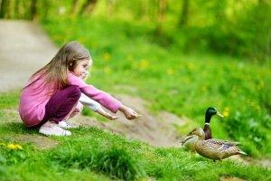 In manchen Gemeinden ist Enten zu füttern verboten: Als Strafe droht ein Bußgeld.