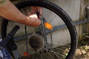 Fahrradreifen wechseln: Hinten ist es meist etwas schwieriger als vorne.