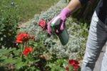 Das Gartenrecht und Nachbarschaftsrecht in Deutschland