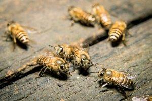 Ratgeber Insekten