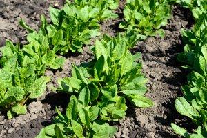 Hausbesitzer mit einem eigenen Garten müssen oft Grünschnitt entsorgen