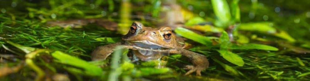 Rote Liste der Amphibien
