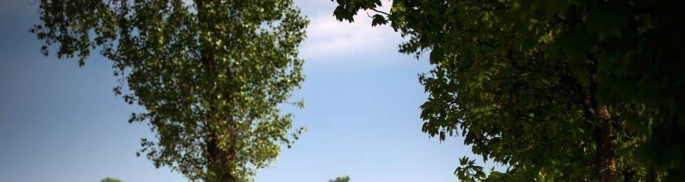 Auf Bäume klettern: Nicht nur Absturz-, sondern auch Bußgeldgefahr?