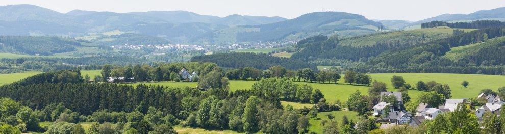 Weidenkätzchen stehen unter Naturschutz: Was bei den Frühlingsboten gilt