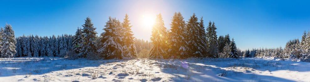 Weihnachtsbaum selber schlagen – Droht Bußgeld?