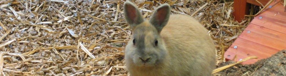 Kaninchen & Hasen vertreiben versus Kaninchenmast