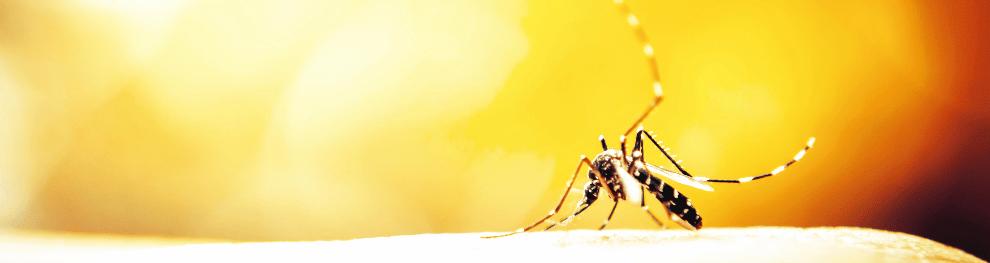 Unliebsame Gäste: Mücken töten und vorbeugen für alle Lebenslagen