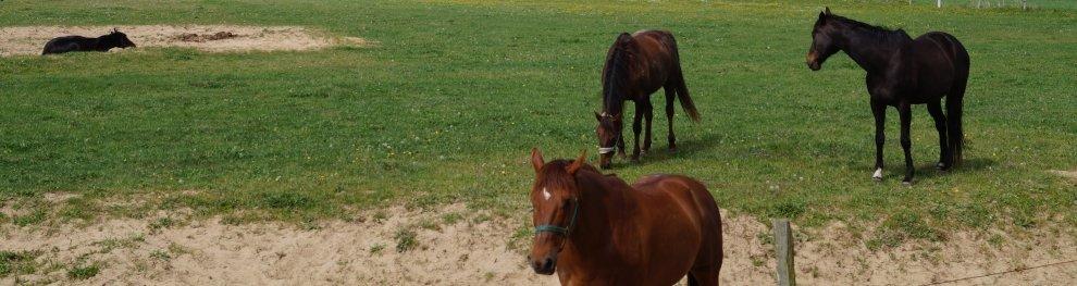 Tierschutz für Pferde und Pferdevermittlung