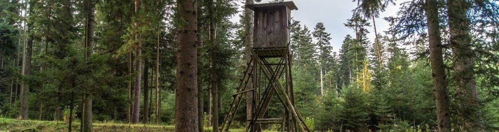 Schonzeiten für Wild – Wann ruht die Jagd?