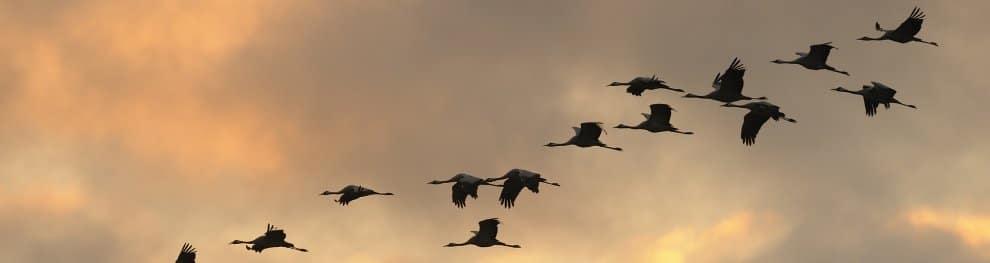 Vögel unter Vogelschutz