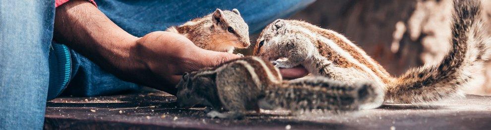 Wildtiere füttern:  Keine gute Idee