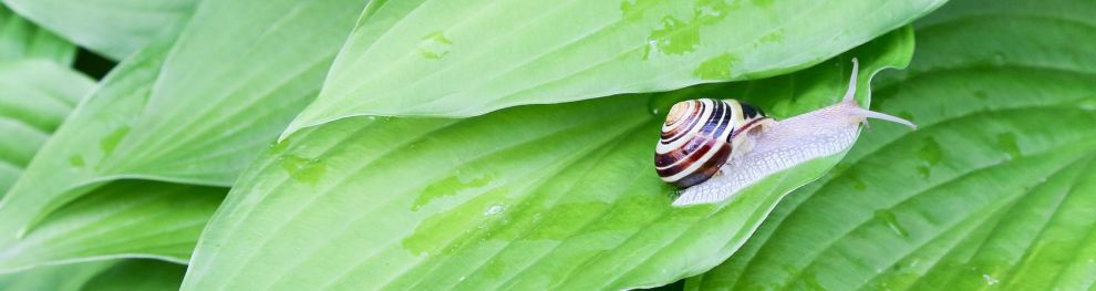Schnecken und Muscheln