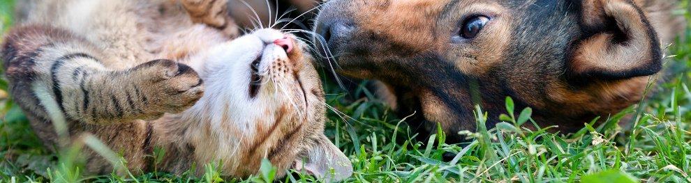 Mit dem Heimtierausweis können auch Tiere problemlos reisen
