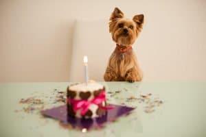 Sie haben den Heimtierausweis Ihres Haustiers verloren? In der Regel kann der Tierarzt schnell für Ersatz sorgen.