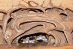 Hornisse im Nest