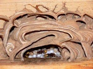 Hummeln sowie Bienen stehen unter Naturschutz