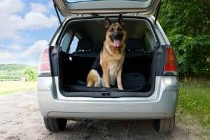 Auch ein Hund als Geschenk muss wohlüberlegt sein. Diese Tierart braucht viel Auslauf.
