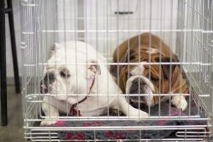 Hund angefahren: Innere Verletzungen und Knochenbrüche sind nicht selten die Folge eines Autounfalls.