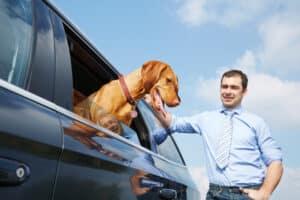 Hund im Auto erholt sich von der Hitze