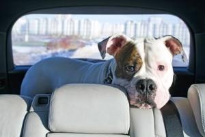 Darf man seinen Hund im Auto lassen?