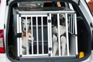 Einen Hund richtig transportieren: Auch hier muss die Ladungssicherung gewährleistet sein.