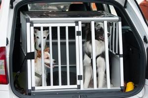 Hund transportieren: Ladungssicherung nicht vergessen